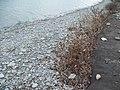Турецкий пляж в несезона (ноябрь)-03.JPG