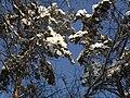 Украина, Киев - Голосеевский лес 172.jpg