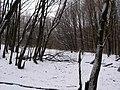 Украина, Киев - Голосеевский лес 32.jpg
