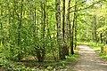 """Черкаський парк """" Перемога"""" , код 71-101-5009 10.jpg"""