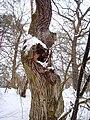 Чернечий Ліс 29.jpg