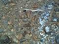 ساقية مياه تقليدية تستعمل لمرور الماء و سقي الاشجار و كافة المزروعات....jpg