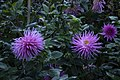 عکس از گلها و گیاهان باغ بوتانیکال تفلیس - گرجستان 34.jpg