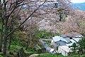 吉野山中千本にて 2014.4.12 - panoramio.jpg