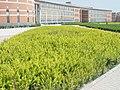 教学楼侧影 - panoramio.jpg