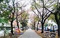 梅川園道.jpg