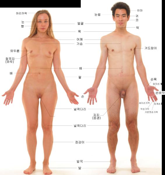File:사람의 몸.png