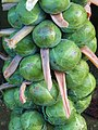 -2020-12-15 Harvested stick of Brussel Sprouts, Trimingham (2).JPG