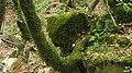 """004 Река """"Кабачок"""". (Туапсинский р-н. 44°11'33.4""""N 38°57'23.0""""E).jpg"""