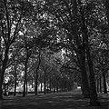 02.09.1961. Cours Dillon. (1961) - 53Fi3066.jpg