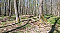 02 Grabhügelgruppe im Waldstück Hainbach.jpg