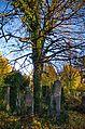 042 - Wien Zentralfriedhof 2015 (22935320350).jpg