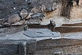 14-11-15-Ausgrabungen-Schweriner-Schlosz-RalfR-044-N3S 4027.jpg