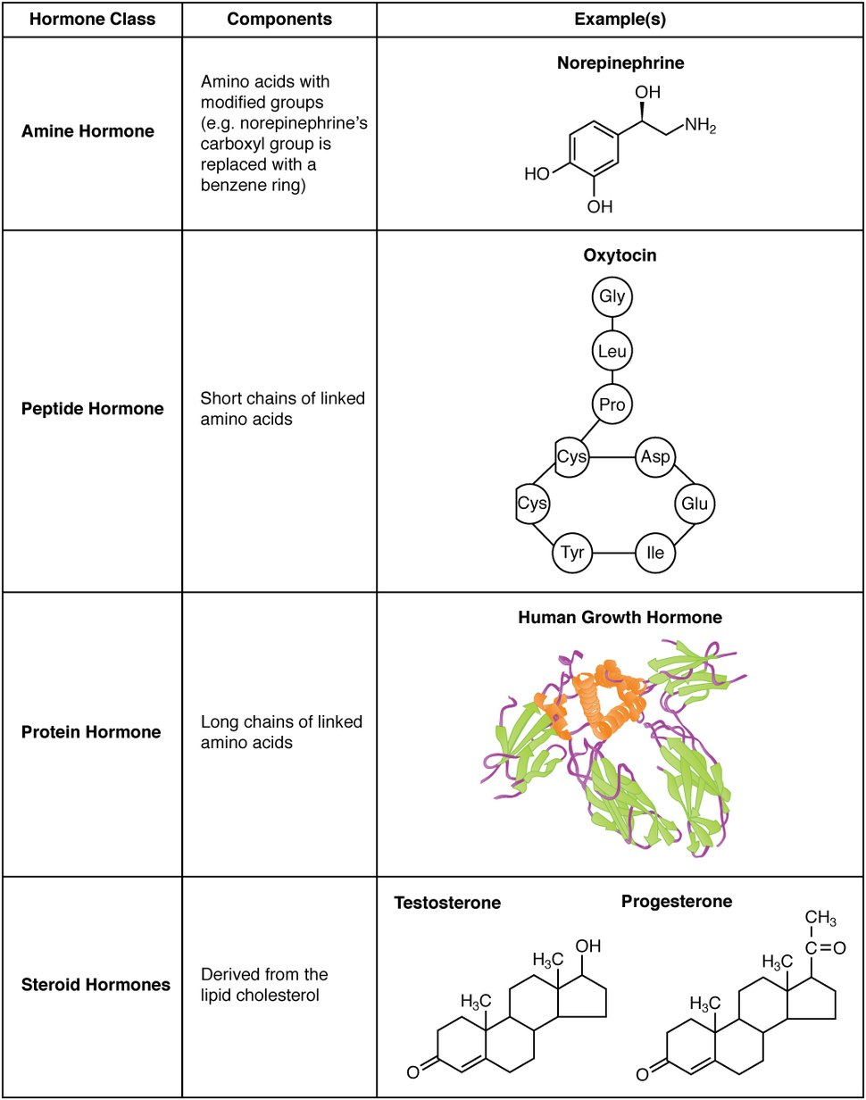1802 Examples of Amine Peptide Protein and Steroid Hormone Structure