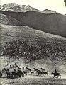 1964-12 1964年 新疆伊犁马群.jpg