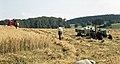 1968 Getreideernte mit Mähdrescher.jpg
