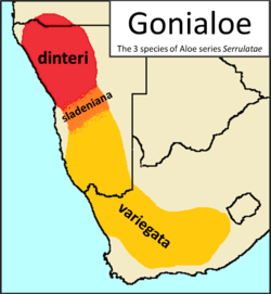 1 Gonialoe species - Aloe variegata sladeniana dinteri distribution map.png