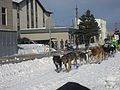 2008 Iditarod Anchorage (2311636543).jpg