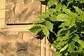 2010.10.14.172614 Blätter Wand Kirchengasse Heppenheim.jpg