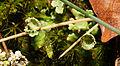2012-11-18 16-28-01-lichen.jpg