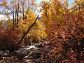 2013-10-15 13 33 40 View up Lamoille Creek in Power House Picnic Site.JPG