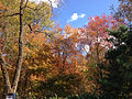 2014-10-30 13 46 32 Trees during autumn in the woodlands along the West Branch Shabakunk Creek in Ewing, New Jersey.JPG