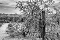 2014-365-189 Leaning on the Desert Fence (14423747960).jpg