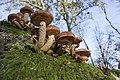 20141113 033 Well De Hamert Paddenstoel (15784570862).jpg