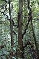 2014 Borneo Luyten-De-Hauwere-Forest-05.jpg