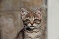 2016-06-25 Wikimania, Cat (freddy2001) (01).jpg