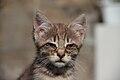2016-06-25 Wikimania, Cat (freddy2001) (03).jpg