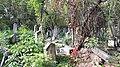 20171004 140231 Old Jewish Cemetery in Bacău.jpg