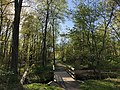 2018-05-01 17 48 11 View along a walking path as it crosses a tributary of Hosepen Run in spring in the Franklin Farm section of Oak Hill, Fairfax County, Virginia.jpg