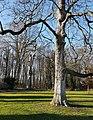 2019 Maastricht, Vaeshartelt, tuin (02).jpg