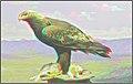 3D IMG 1124= (11548159335).jpg