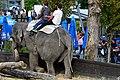 50 Jahre Knie's Kinderzoo (1962-2012) - Elephas maximus transport 2012-10-03 15-37-56.JPG