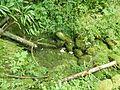 6DSCN6797(lit asséché du ruisseau).jpg