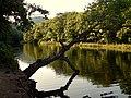 Ağaç... - panoramio.jpg