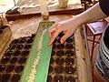 AJM 014 Salad seeds Cuba.JPG