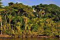 ALI, M. (2011-2013). Parc Amazonien de la Guyane. Fleuve Maroni. 1 (2).jpg