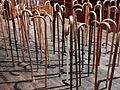 A Forest of Walking Sticks (26107976093).jpg