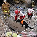A SAR dog of Iranian Red Crescent.jpg