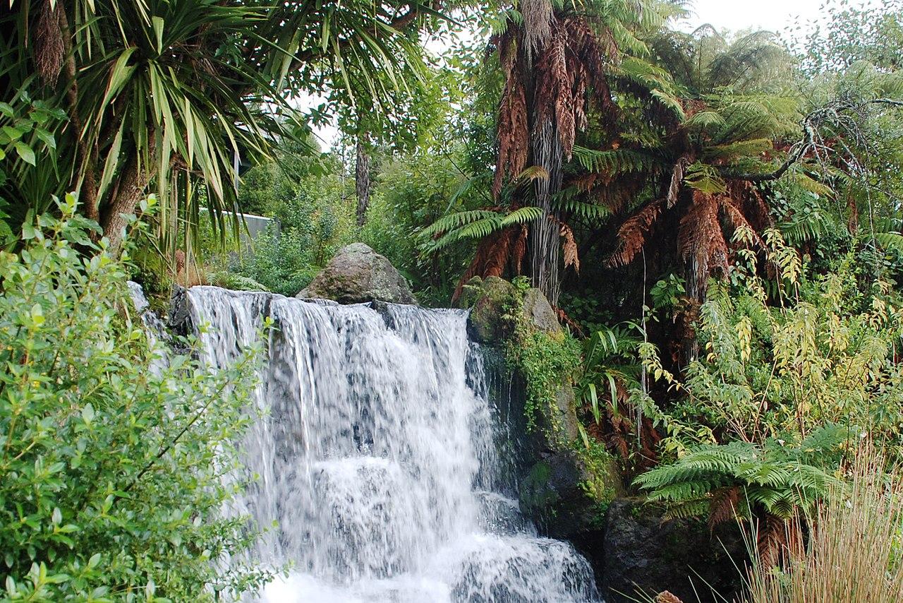 SEO Rotorua