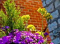 A garden near Scarborough (4629058633).jpg