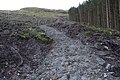 A new forest path winding steeply uphill - geograph.org.uk - 1029929.jpg