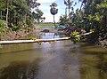 A pond at Kharua Rajapur village in North 24 Parganas district, West Bengal - 2020-07-16.jpg