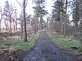 A strip wood, Winton - geograph.org.uk - 1135944.jpg