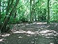 A walk through Poringland Wood - geograph.org.uk - 1371358.jpg