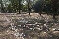 Aftermath of holi festival santiniketan mass tourism.jpg