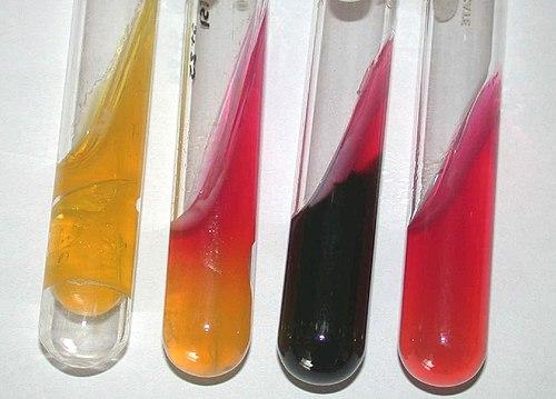 Quimico bacteriologo parasitologo yahoo dating